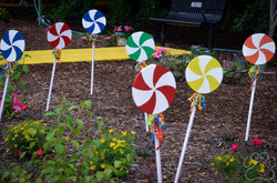 2016 Oz Garden Lollipops