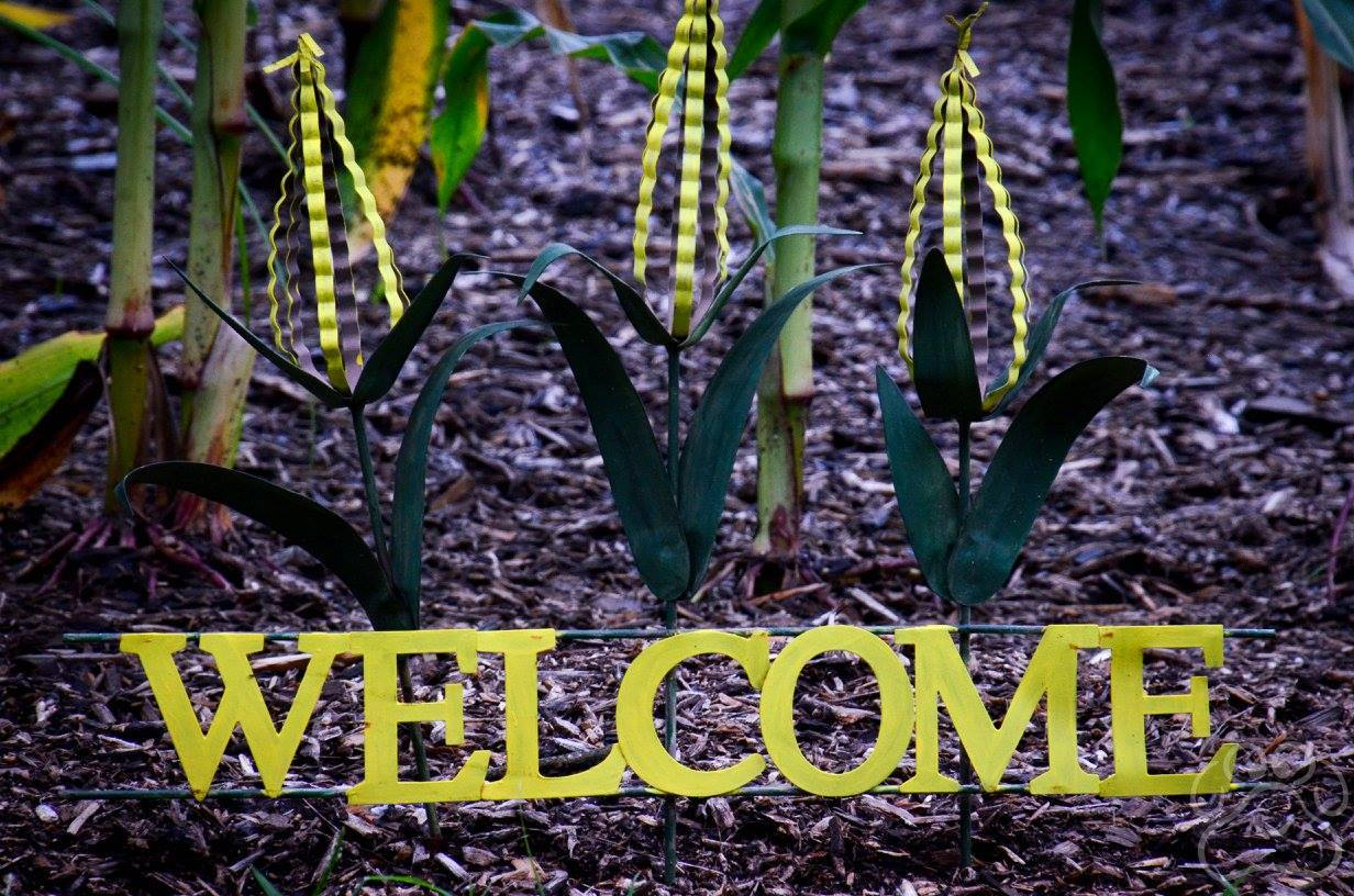 2016 Oz Fest Welcome in corn field