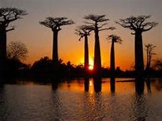 サン=テグジュペリの小説「星の王子様」に登場するバオバブが無数に立ち並ぶマダガスカル島・モロンダバのイチオシの絶景スポット「バオバブ並木」の情報ページです。バオバブ並木の見どころ、ベストシーズン、アクセスのコツ、合わせて立ち寄りたい名所など観光のポイントから地図、ハイライト動画まで幅広くご案内しています。詳細はこちらからご覧ください。
