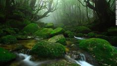 樹齢3000年以上とされる屋久杉の原生林で知られる鹿児島県・屋久島のイチオシの人気スポット「屋久島・白谷雲水峡」の情報ページです。屋久島・白谷雲水峡の見どころ、ベストシーズン、アクセスのコツ、合わせて立ち寄りたい名所など観光のポイントから地図、ハイライト動画まで幅広くご案内しています。詳細はこちらからご覧ください。