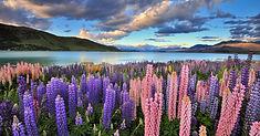 ゴールドラッシュ時代の面影を残す黄葉の名所として知られるニュージーランド・南島のイチオシのお祭り「秋色の絶景(アロータウン・オータム・フェスティバル)」の情報ページです。秋色の絶景(アロータウン・オータム・フェスティバル)の見どころ、日程、楽しみ方、合わせて立ち寄りたい名所など観光のポイントから地図、ハイライト動画まで幅広くご案内しています。詳細はこちらからご覧ください。