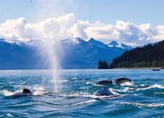 シアトル発着で世界遺産グレーシャーベイなどアラスカ湾岸の主要観光地をプレミアム客船「ルビープリンセス号」で巡るアラスカクルーズ旅行の情報ページです。客船情報からスケジュールの詳細、寄港地、地図、ハイライト動画まで幅広くご案内しています。詳細はこちらからご覧ください。