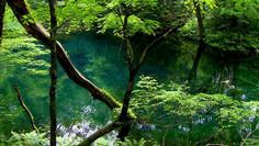 世界最大級のブナの原生林として知られる青森県・秋田県のイチオシの絶景スポット「白神山地」の情報ページです。白神山地の見どころ、ベストシーズン、アクセスのコツ、合わせて立ち寄りたい名所など観光のポイントから地図、ハイライト動画まで幅広くご案内しています。詳細はこちらからご覧ください。
