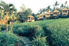 バリ島観光のハイライト「ウブド王宮」があるインドネシア・バリ島ウブド地区のイチオシのリゾートホテル「ビユククン・スイーツ&スパ・ウブド・バリ」の情報ページです。ビユククン・スイーツ&スパ・ウブド・バリの設備やサービスからアクセスのコツ、周辺の観光のポイント、地図、ハイライト動画まで幅広くご案内しています。詳細はこちらからご覧ください。