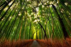 京都嵐山の代表的な観光名所のひとつとして知られる京都府・京都市嵐山のイチオシの人気スポット「竹林の道」の情報ページです。竹林の道の見どころ、ベストシーズン、アクセスのコツ、合わせて立ち寄りたい名所など観光のポイントから地図、ハイライト動画まで幅広くご案内しています。詳細はこちらからご覧ください。