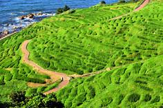 日本初の世界農業遺産として知られる石川県・輪島市のイチオシの人気スポット「白米千枚田」の情報ページです。白米千枚田の見どころ、ベストシーズン、アクセスのコツ、合わせて立ち寄りたい名所など観光のポイントから地図、ハイライト動画まで幅広くご案内しています。詳細はこちらからご覧ください。