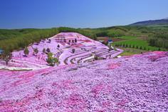 およそ8ヘクタールにおよぶ「ピンクのじゅうたん」として知られる北海道・大空町のイチオシの絶景スポット「東藻琴芝桜公園」の情報ページです。東藻琴芝桜公園の見どころ、ベストシーズン、アクセスのコツ、合わせて立ち寄りたい名所など観光のポイントから地図、ハイライト動画まで幅広くご案内しています。詳細はこちらからご覧ください。