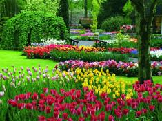 春の花に彩られた山車と車がパレードする花王国オランダのイチオシの祭典「花の祭典・フラワーパレード」の情報ページです。花の祭典・フラワーパレードの見どころ、日程、楽しみ方、合わせて立ち寄りたい名所など観光のポイントから地図、ハイライト動画まで幅広くご案内しています。詳細はこちらからご覧ください。