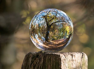 entrepeneur nature glass ball with tree.