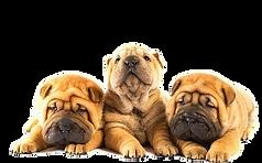 pups & play groepsles
