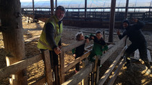 Lambing with the Lennox Family