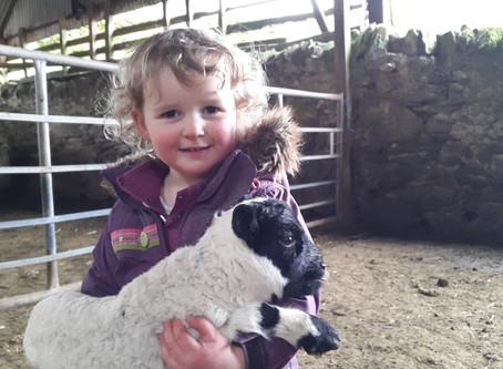 Lambing Time 2016
