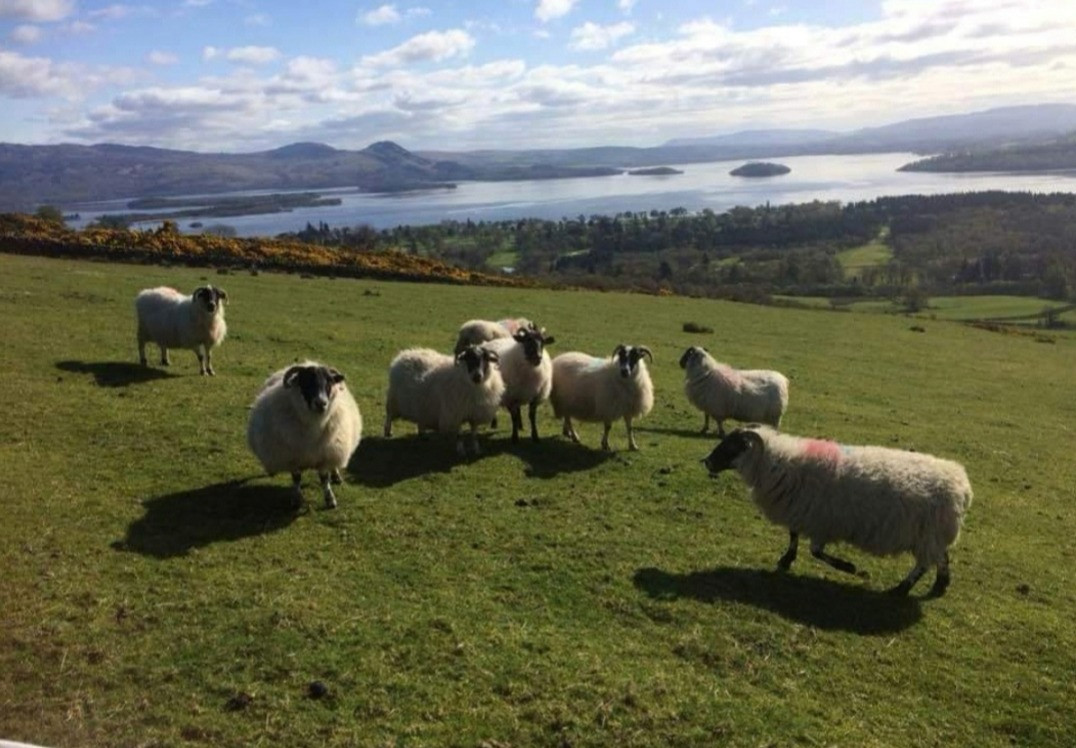 Flock together to see Loch Lomond
