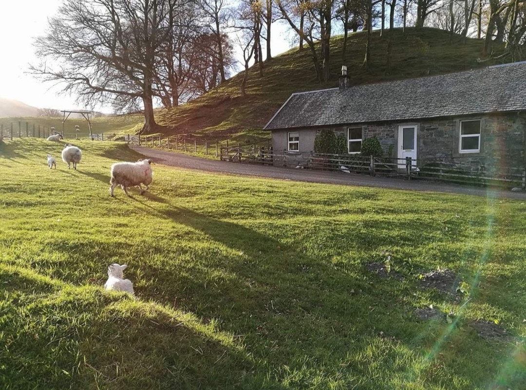 The cottage at Lambing time
