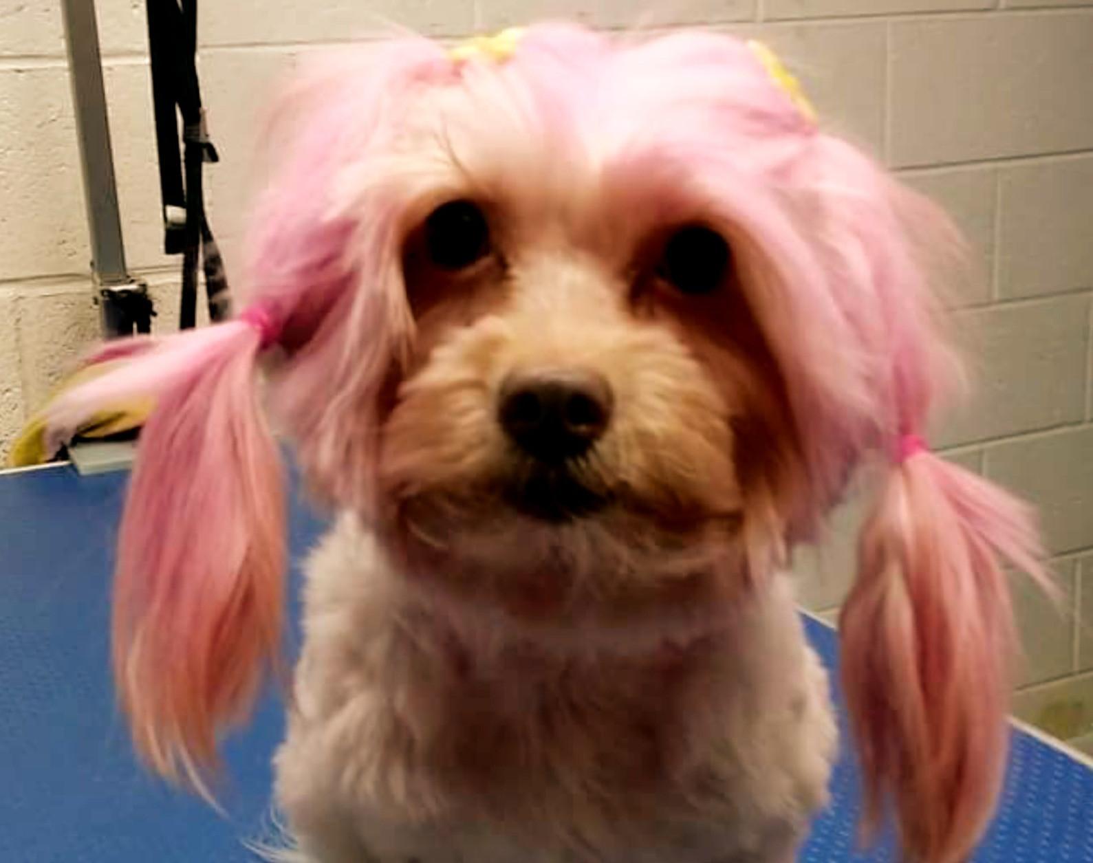 Animal Friendly Hair Color