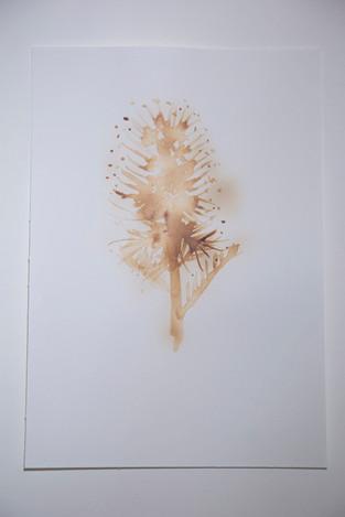 Scorpionweed