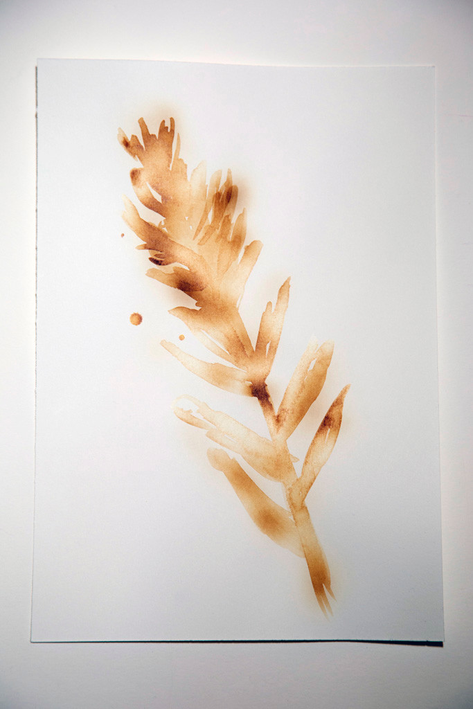 Alana Bartol, Paintbrush, Invisible Impacts: Plants of Grassy Mountain, 2020. Heated milk on paper, 17.78 x 25.4 cm, original drawing. Photo: blkarts.ca.