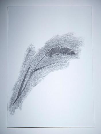 Hairy Wild Rye