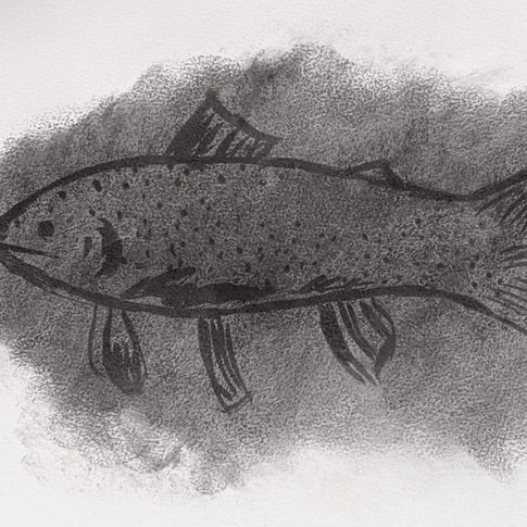 Westslope Cutthroat Trout (a canary in the coal mine)