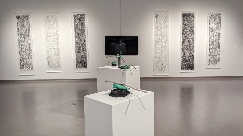 Installation view, Processes of Remediation: art, relationships, nature