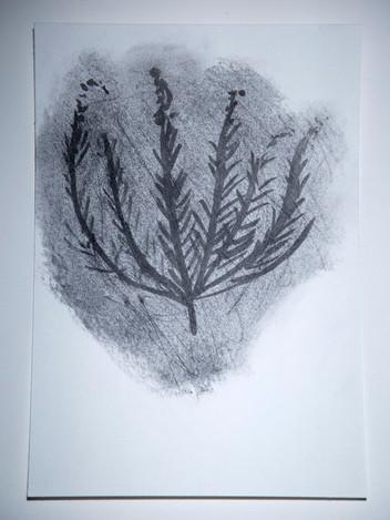 Sagebrush (Artemisia cana)