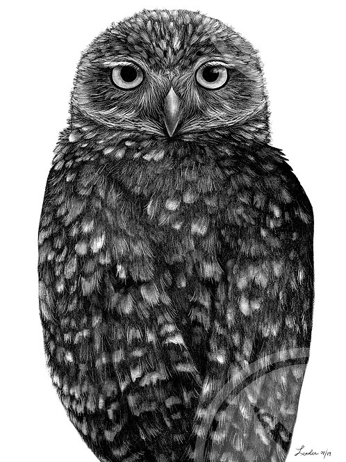 Limited Run of 50: Burrowing Owl  Pencil Drawing Print