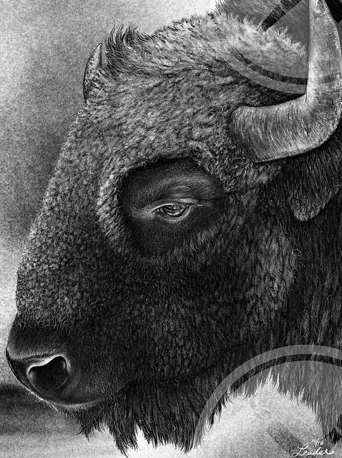 Limited Run of 50: Bison Pencil Drawing Print