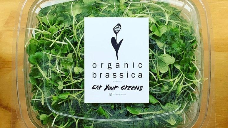 Brassica Micro Mix