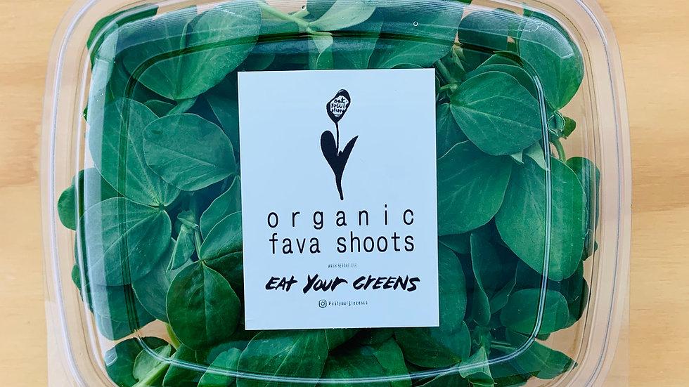 Organic Fava Bean Shoots