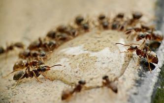 """""""Las hormigas, pueblo no fuerte"""", pero sabio."""
