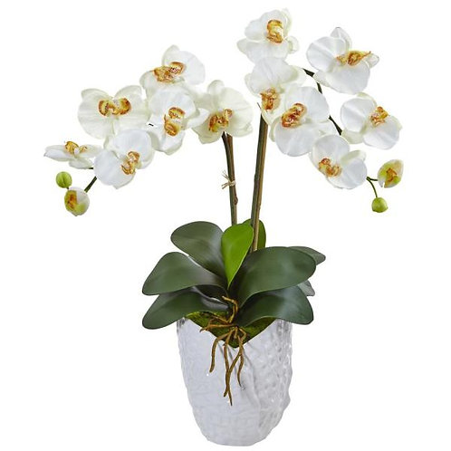 Large Orchid with Vase