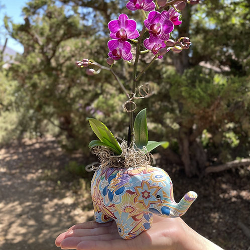 Darling orchid in painted elephant vase