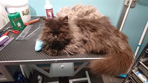 kattentrimsalon Cats Haircare