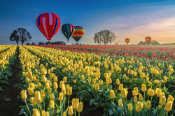 wooden-shoe-tulip-festival.jpg
