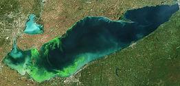 PHOTO - Lake Erie HABs - 06242019 - NASA