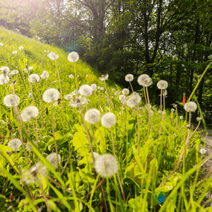 Garden 001.jpg