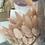 Thumbnail: Mini Dried Bunny Tails Bottle