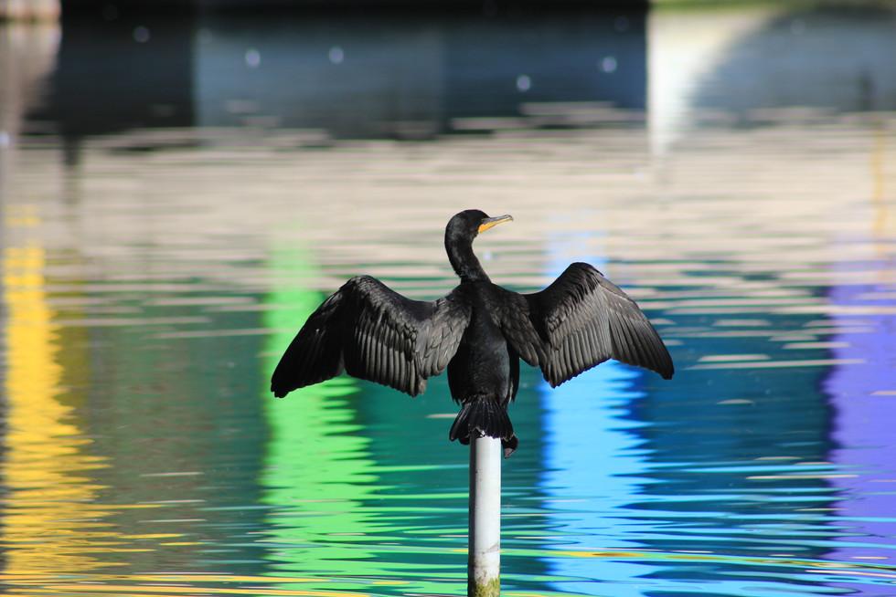 Bird at Lake Eola | Orlando Nature Photography | Sunshine Photography