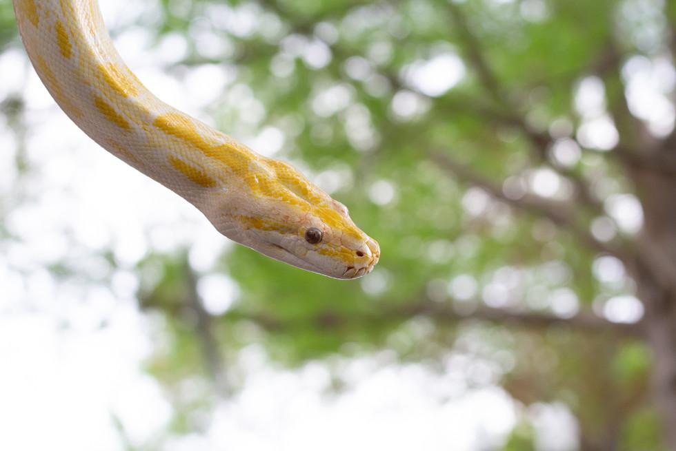 Snake at Lake Eola | Orlando Nature Photography | Sunshine Photography