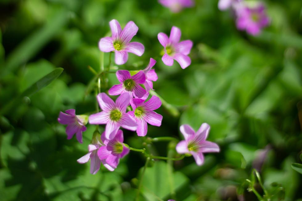 Flowers | Orlando Nature Photography | Sunshine Photography
