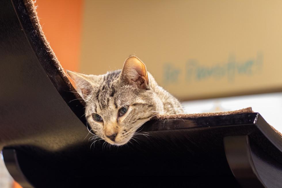 Orlando Cat Cafe | Orlando Nature Photography | Sunshine Photography