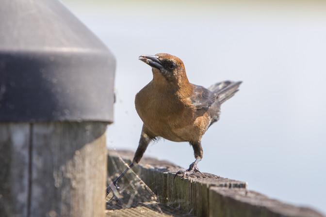 Bird | Orlando Nature Photography | Sunshine Photography
