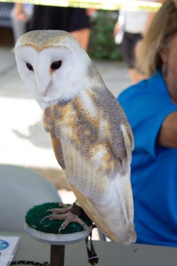 Owl | Orlando Nature Photography | Sunshine Photography
