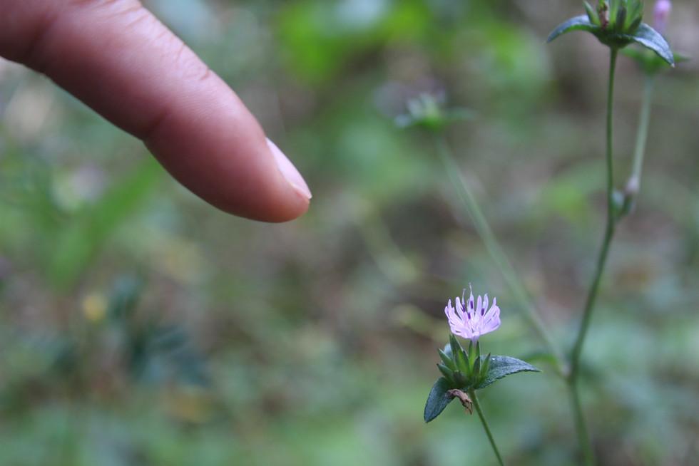 Flower at Shingle Creek Trail | Orlando Nature Photography | Sunshine Photography