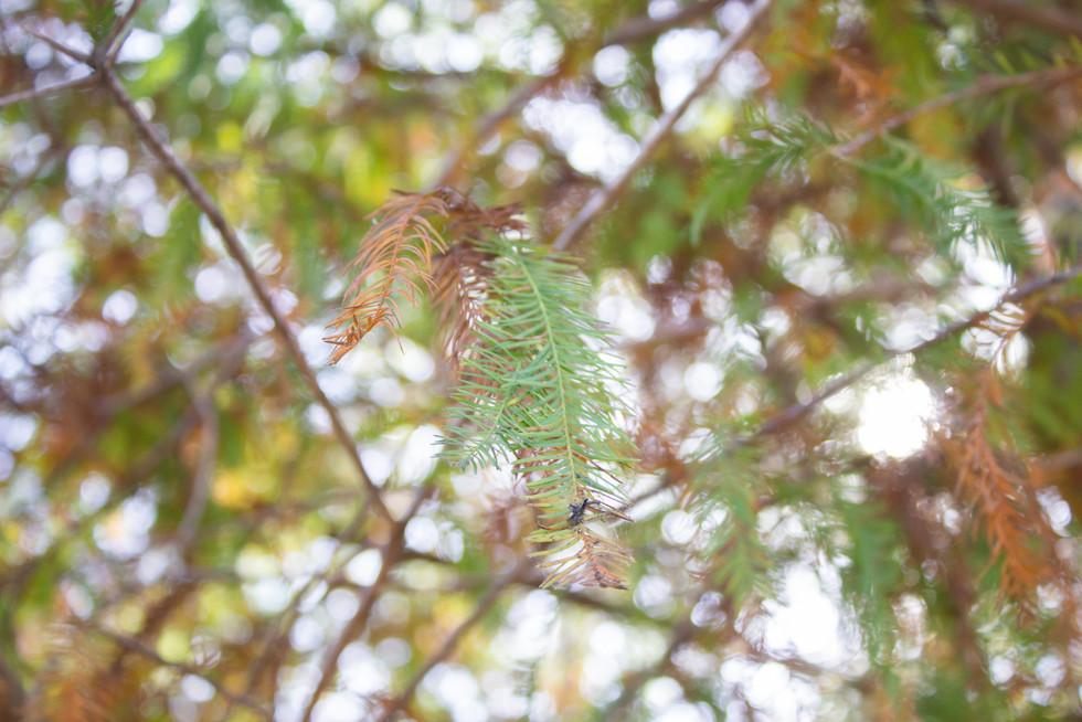 Trees | Orlando Nature Photography | Sunshine Photography