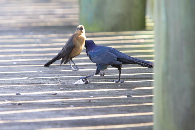 Birds | Orlando Nature Photography | Sunshine Photography