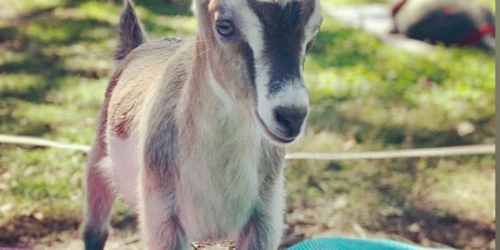 Yoga with Little Goats - Broward