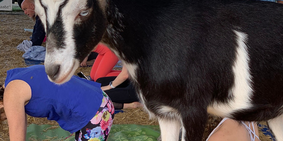 Yoga with Little Goats - Broward - 9:00