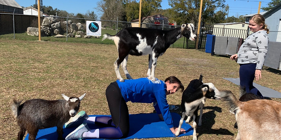 Yoga with Little Goats - You Farm - POSTPONED