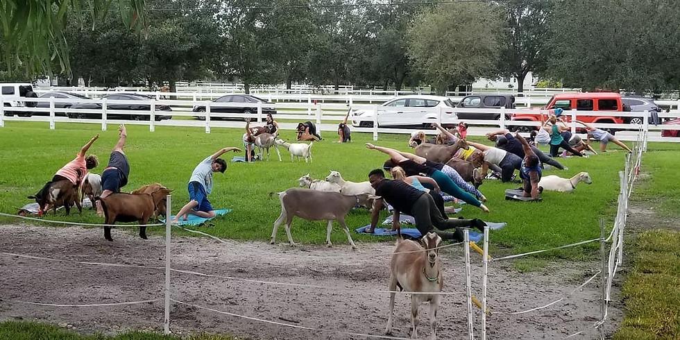 Yoga with Little Goats - Broward - 10:30